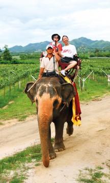 - Tradisjonelt har vi ingen vinkultur her i landet, men det er blitt trendy blant de unge å nyte vin, sier Khun Kay ved Hua Hin Hills Vineyard. Foto: Runar Larsen