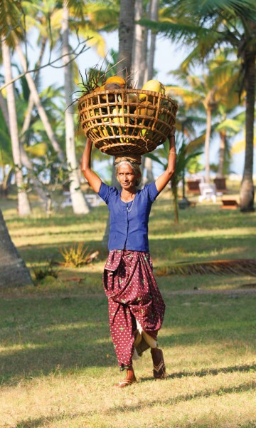 Marari Beach Resort har fokus på bærekraftig turisme. Det betyr at hver kokosnøtt utnyttes for det den er verdt, som mat og brennstoff. FOTO: RUNAR LARSEN