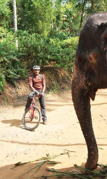 Wayanad er Keralas minst kjente distrikt, og har en mystisk aura. Hit kommer du for å sykle blant elefanter og teplantasjer i en sparsomt utbygd region. FOTO: RUNAR LARSEN