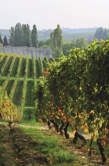 Cascina Castagna ligger i en liten kommune i Asti-distriktet, hvor det er 1300 innbyggere- men 400 vingårder. Foto: Marte Veimo