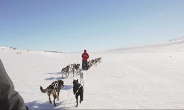 Det tar en time å sele opp og feste hundene til spannet, men når det først er gjort går det unna over løssnøen. Foto: Kjersti Vangerud