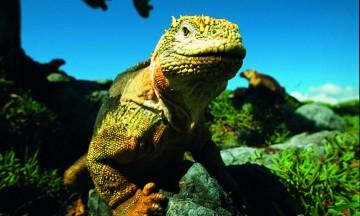 Både naturen og dyrelivet er variert, og henger sammen - dyrene har utviklet seg for å passe til naturen de bor på. Iguanene også. Foto: Torild Moland
