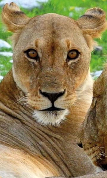 I Etosha nasjonalpark vrimler det av flotte dyr. Foto: Hans Thomas Holm