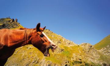 «Ferie på hesteryggen har tatt meg til fantastiske destinasjoner, gitt meg mange vanvittige opplevelser og gode venner rundt omkring i verden» Foto: Jorunn Elise Østbø