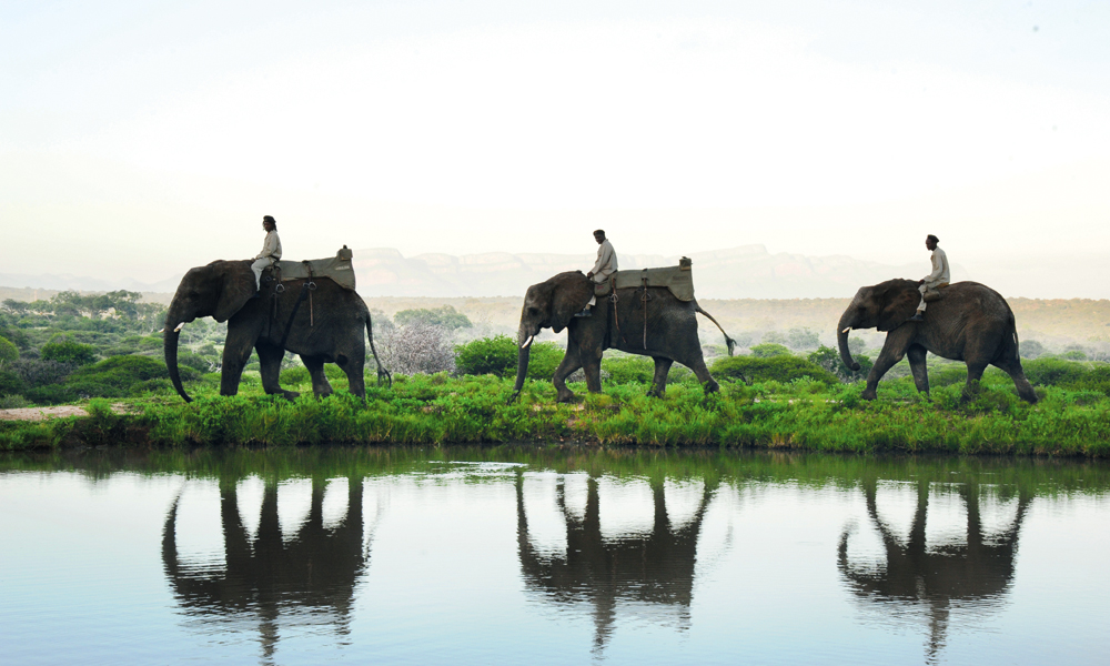 – Jeg elsker å jobbe med elefantene, det virker som de forstår meg bedre enn mennesker, mener elefantpasser Tigere Matipedza. Foto: Ronny Frimann