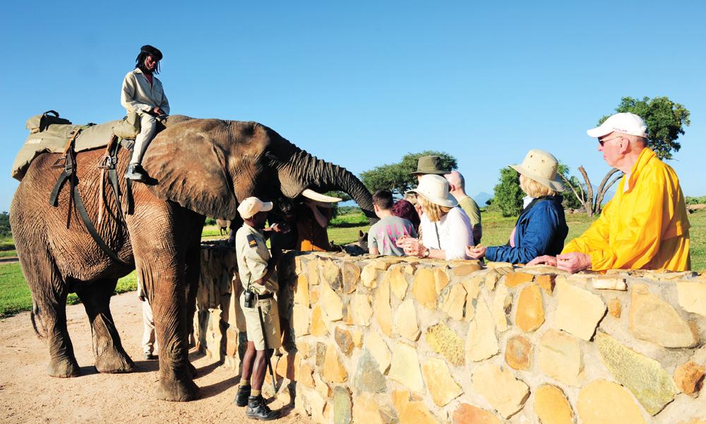 Nesten hver dag møter Jabulani nye mennesker. Først viser han og Tigere dem noen triks og hilser på, siden går ferden ut på safari i bushen. Foto: Ronny Frimann