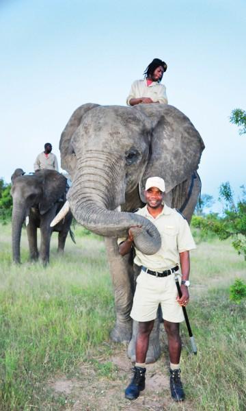 Alle elefantene i Jabulanos flokk var foreldreløse  da de ble funnet, men har nå fått en ny familie. Den består av 14 elefanter og 38 passere som tilbringer hele dagen sammen. Foto: Ronny Frimann