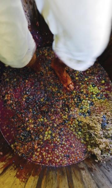Pirgis xysta-mønstre er en bedre idé enn å tråkke vin i hvit piratbukse.  Foto: Gjermund Glesnes