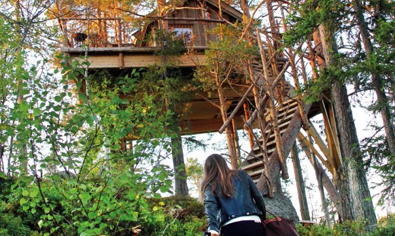 5. Bo i toppen av et tre - Brumunddal