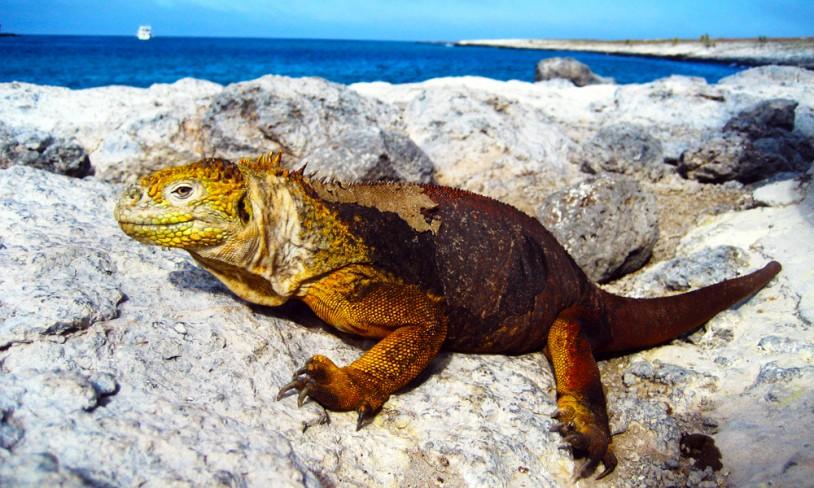 22. De forheksede øyene - Galápagos, Ecuador