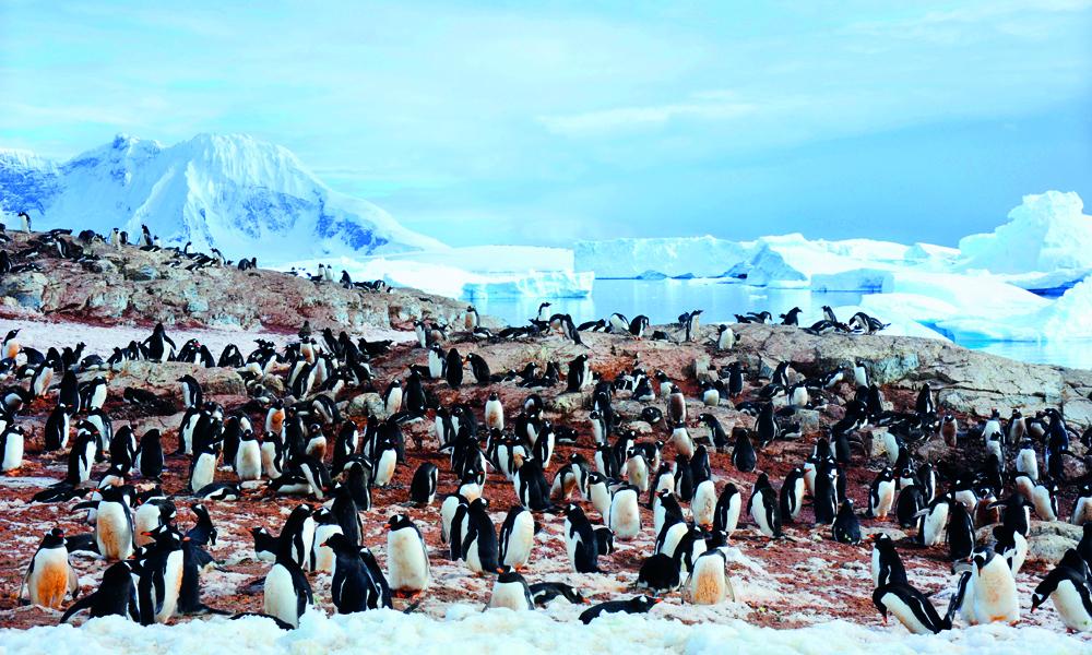 I Antarktis kan Ann Kristin vente seg både storslått natur og et rikt dyreliv. Foto: Ronny Frimann