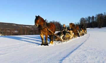 Kusk Ole Peder Svendsen og hesten Bronen viser vei på de gamle vinterveiene over vidda. Foto: Ida Anett Danielsen