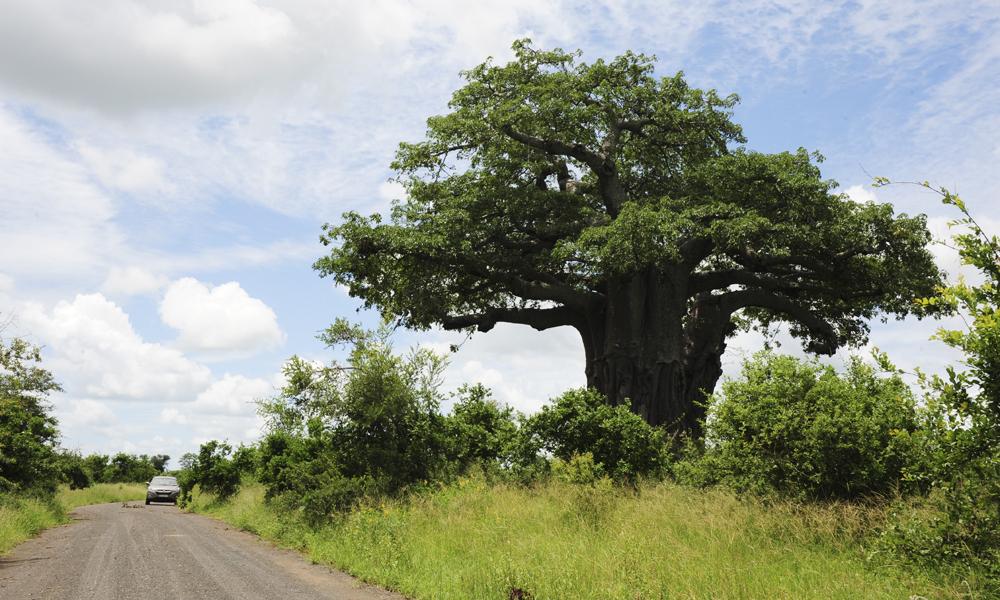 Kruger er en av Afrikas mest populære safariparker, men det er likevel lett å finne sin egen ro. Foto: Torild Moland