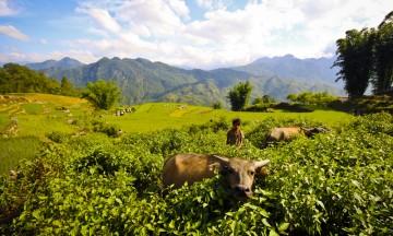 Sapa ligger rundt 1500 meter over havet, og den klare luften river i lungene. Foto: Preben Danielsen