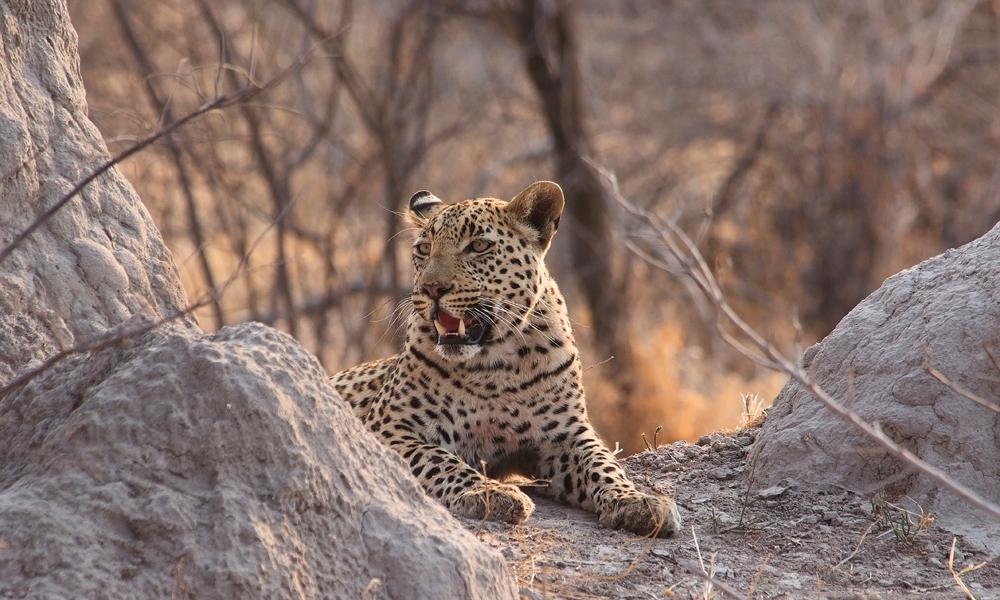 Selv med en leopard i nærheten legger vi ut på vandring. Foto: Ronny Frimann