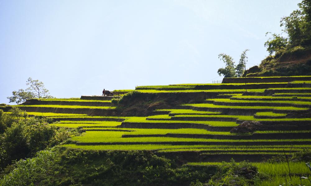 Risterrassene er ofte det som imponerer turistene mest når de kommer til Sapa, og det er et imponerende syn. Foto: Preben Danielsen