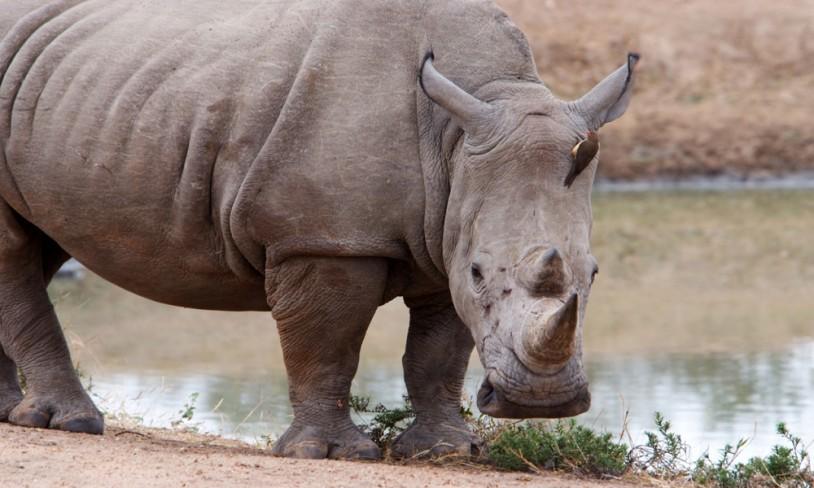 5. Khama Rhino Sanctuary
