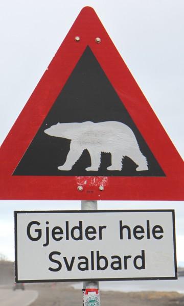 Det er ingen tvil om hvem som råder på Svalbard. Foto: Runar Larsen