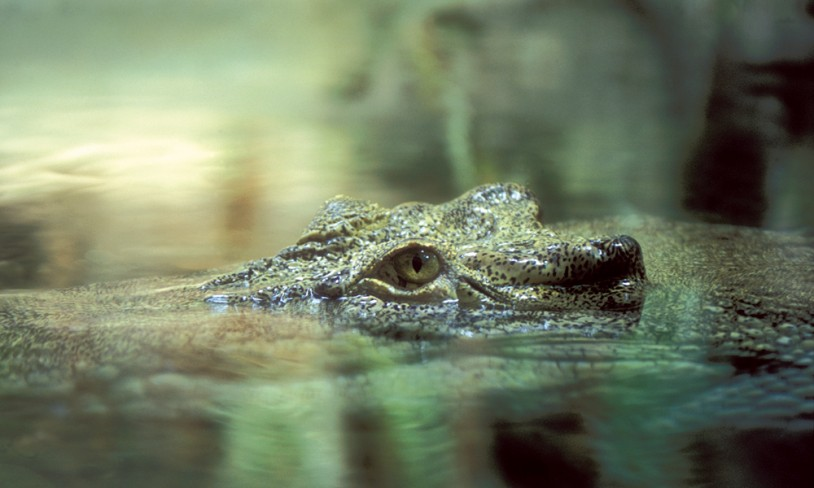 9. Kakadu nasjonalpark