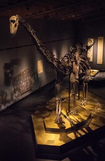 Vil du ha en pause fra shoppingen ligger også Zoologisk Museum i området. Foto: Birgitte Rub/ Zoologisk Museum