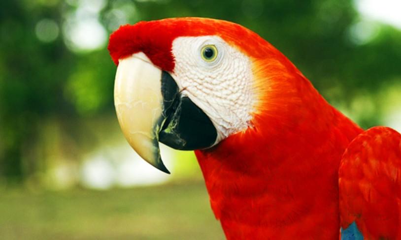 8. Amazonas-eventyret