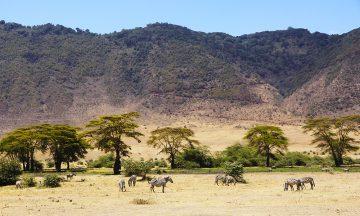 Ngorongorokrateret er et av Tanzanias mest populære steder for safari – med god grunn. Foto: Runar Larsen