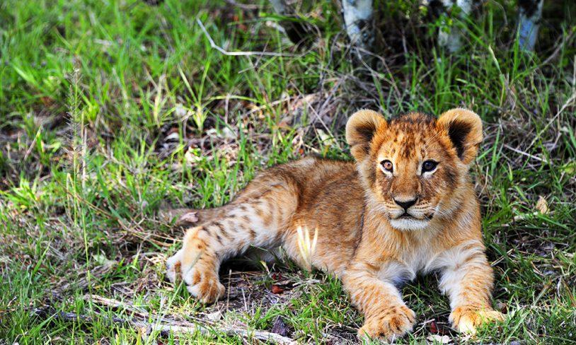 33. Safarieventyr