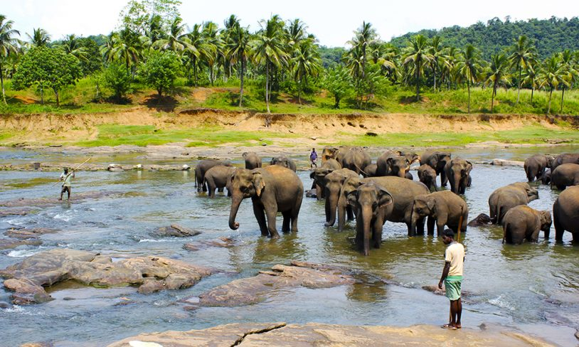 31. Sri Lanka