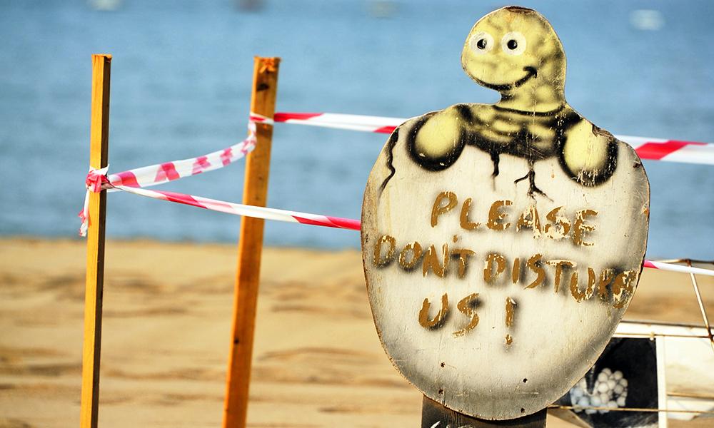 Stranda er så ren at skilpaddene fortsatt kommer hit for å legge egg. Foto: Torild Moland