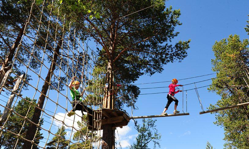 6. Høyt opp i trærne, og ned igjen
