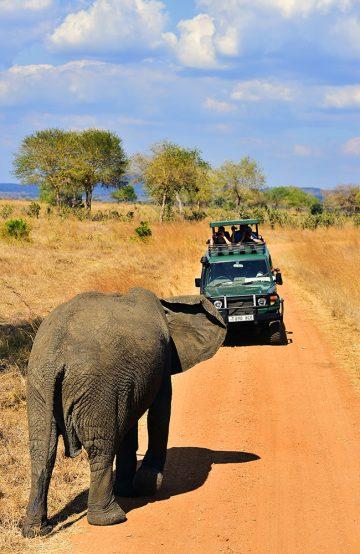 Elefantmøter og løve i solnedgang – små detaljer, store opplevelser. Foto: Ronny Frimann