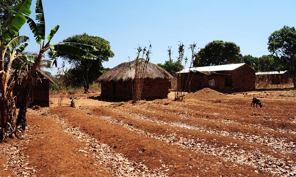 6. Kaffe Tanzania