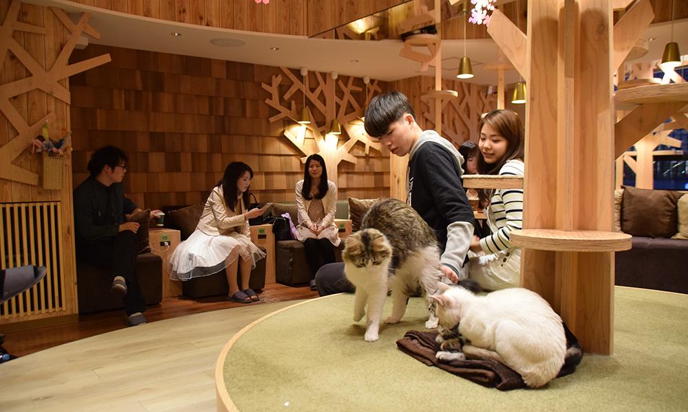 Skal det være en katt til kaffen? I Tokyo er det meste mulig. Foto: Mari Bareksten