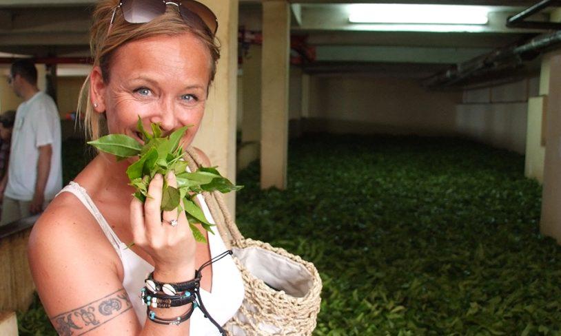 5. Besøk en teplantasje