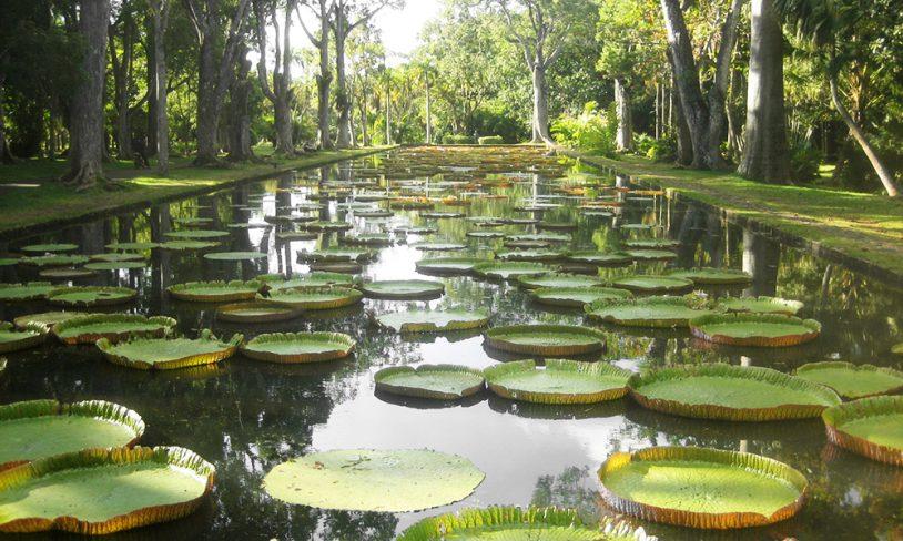 7. Vakker botanisk hage