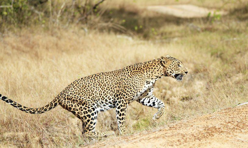 6 Safari