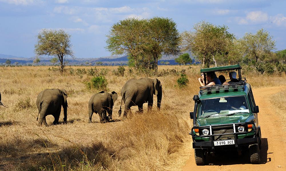 Ruaha er Afrikas nest største nasjonalpark, lite besøkt – men med et vannvittig dyreliv. Foto: Ronny Frimann