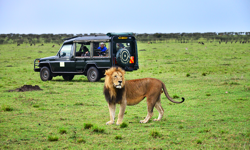 Man vet aldri hva man opplever på safari. Plutselig hilser til og med selve majesteten på. Foto: Ronny Frimann