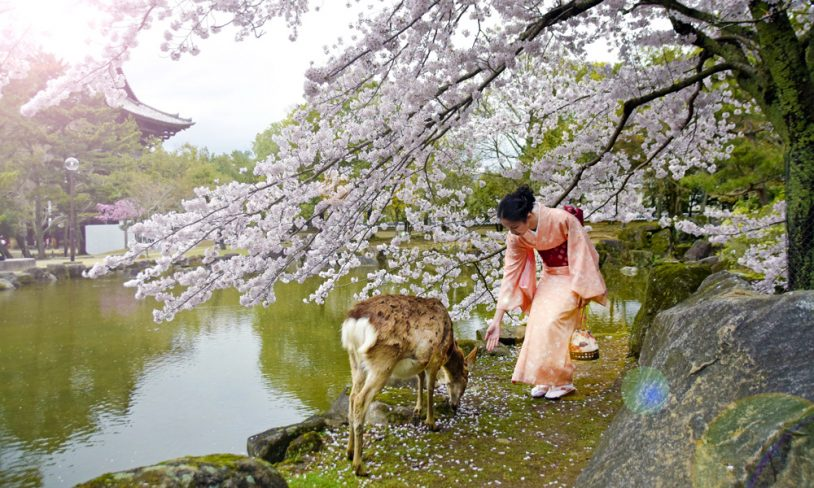 2. JAPAN – vår nye favoritt i Østen