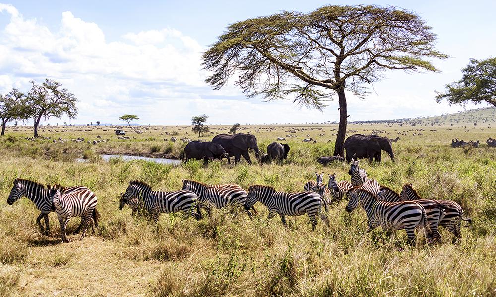 Det blir tid for herlige dager på savannen. Foto: Magical Kenya