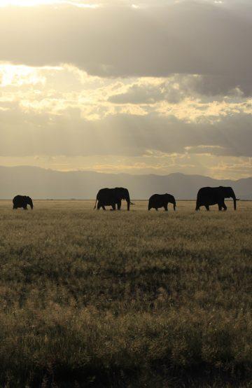 I Kenya venter både flotte naturlandskap og dyreopplevelser. Foto: Magical Kenya