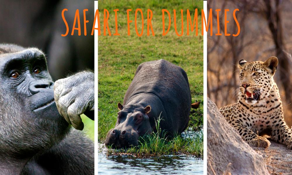 I den store safariguiden «Safari for dummies» tipser vi blant annet om hvor du finner dyrene og hva du bør se etter. Foto: iStock, Ronny Frimann