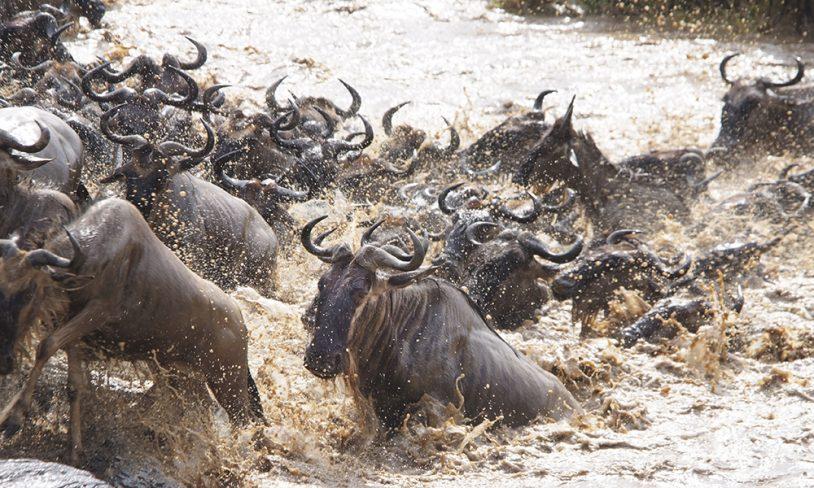 5. Dyrevandringens Kenya