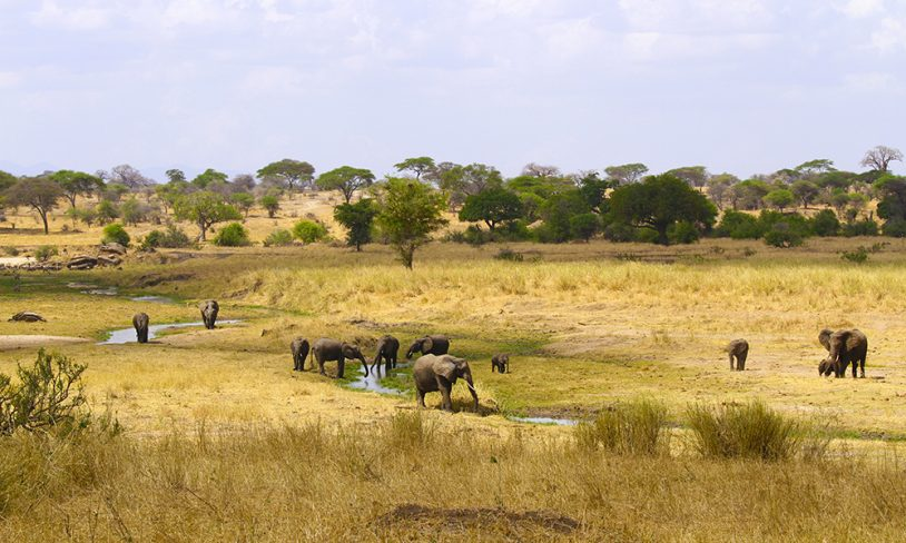 2. Safarisjefen Tanzania
