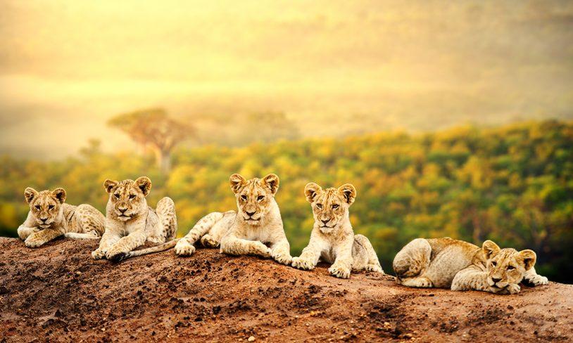 10 PÅ TOPP: SAFARILAND I AFRIKA