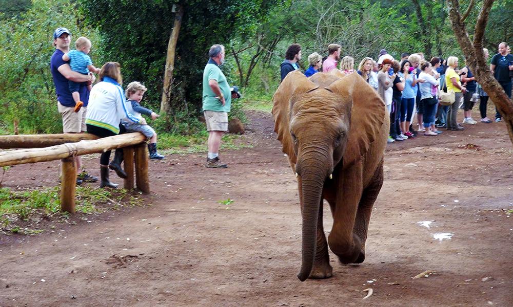 Elefantungene er skikkelige røvere: De velter seg i gjørmebad og lekesloss. Foto: Torild Moland
