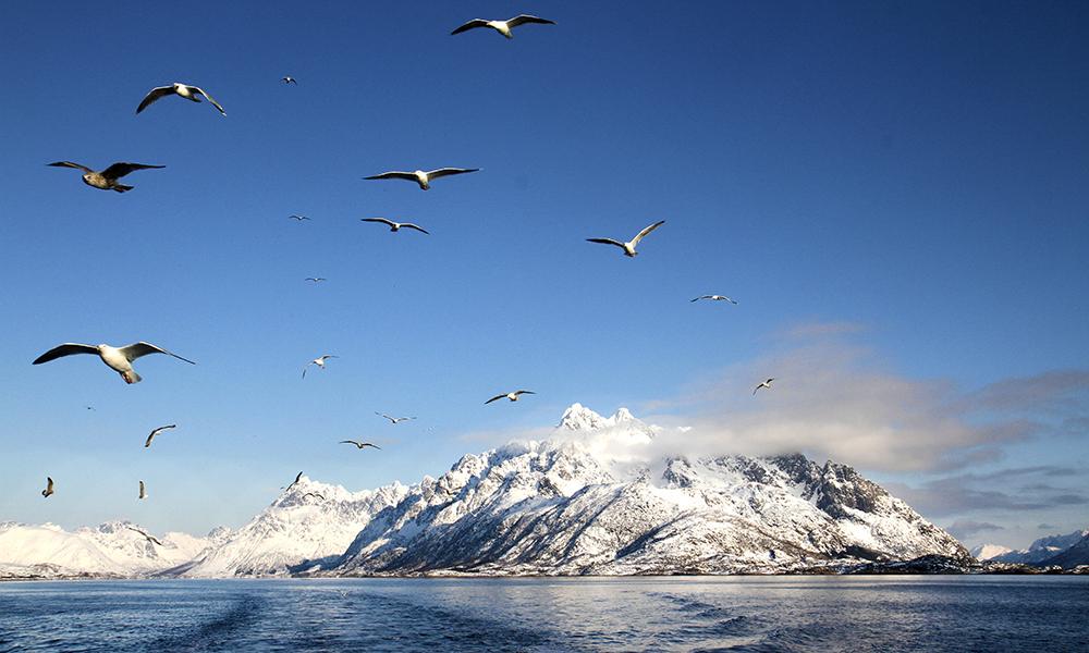 Nydelige Nord-Norge. Foto: Runar Larsen