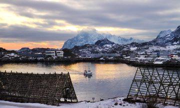 Det tradisjonsrike Lofotfisket har tradisjoner 1000 år tilbake i tid, og er vinterens høydepunkt både for fiskere og gastronomer. Foto: Runar Larsen