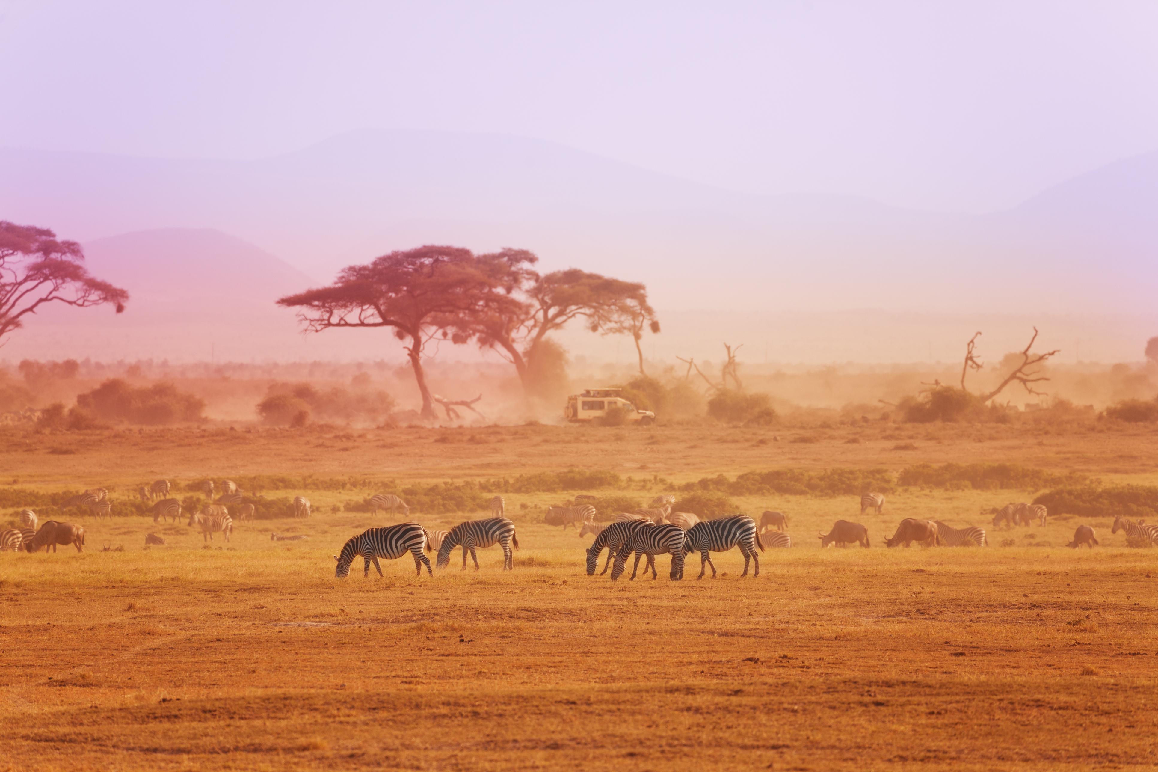 Kenya er et av verdens mest kjente, og beste, safariland. Her venter storslagne opplevelser både i Amboseli og Tsavo nasjonalparker.