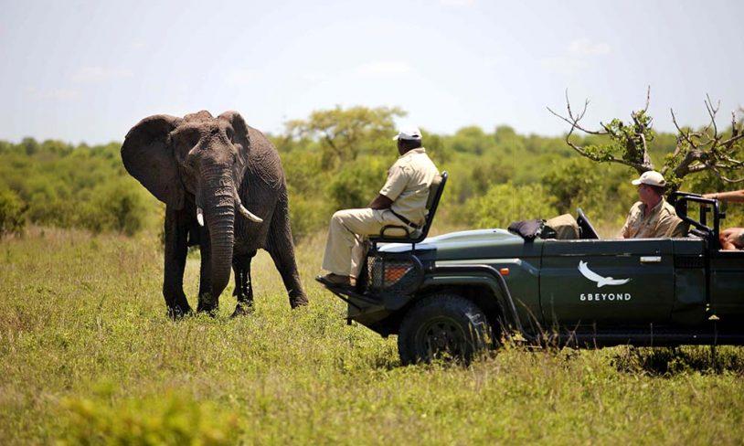 21. Ngala Safari Lodge
